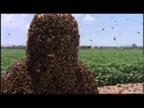 amazing 20 kilos bee suit
