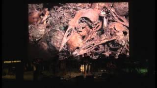 Video Píseň z korun stromů