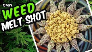 20 Amazing Weed Melt Shots by Cannabis Marijuana Weed