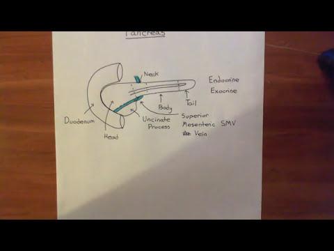The Pancreas Part 1