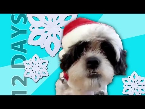 """Animais cantam """"12 Days of Christmas"""""""