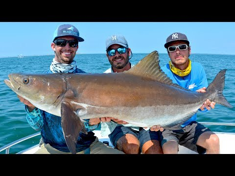 Sight Fishing GIANT Cobia on Stingrays and Bridges in Virginia