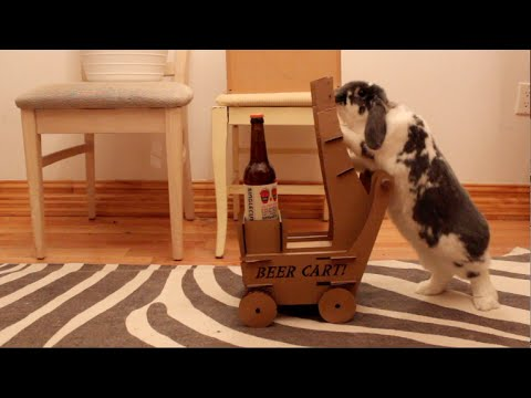 Man Trained Rabbit To Bring Him Beer [Video]