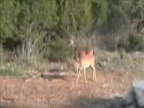 7222008_PWL Fox and Deer (web)