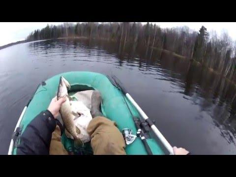 щука в харькове видео