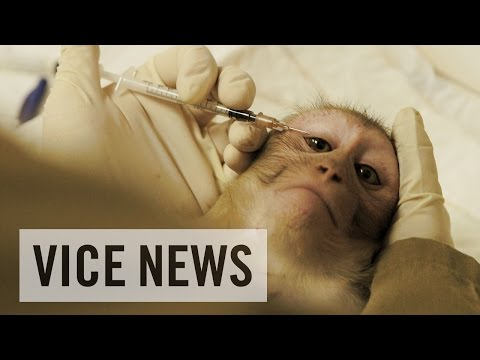 Experimenting on Animals: Inside The Monkey Lab