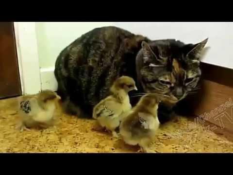 Приколы С Животными Подборка Смех До Слез! (видео)