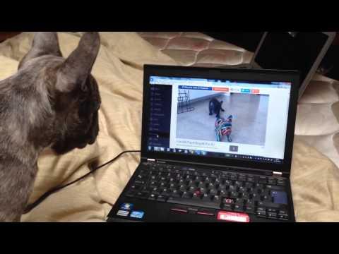 Totalno zbunjen i pogubljen: Pas ugledao sebe u videu