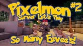 Pixelmon Server Minecraft Pokemon Mod Season 2: LittleLizard's Server, Episode 2 - So Many Eevee's!