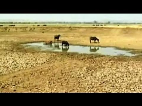 drought - Maharashtra is in the grip of the worst ever drought since 1972. Ask the politicians, and they will say it's about a shortage of rainfall. But this week, a T...