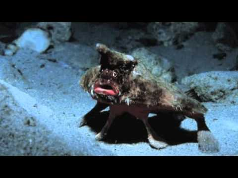 weird marine animals - When most people think of the ocean they probably imagine whales, dolphins, sharks, and other normal things. As you get deeper beneath the waves, however, th...