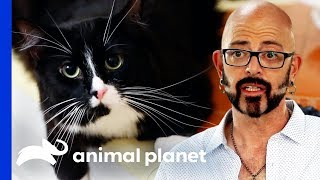 Frustrated Owner Considers Declawing His Cat | My Cat From Hell by Animal Planet