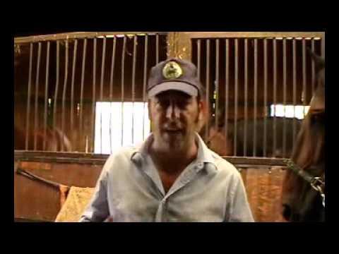 Cavalli salvomiceli for Quanto costa mantenere un cavallo
