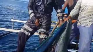 Dokumentasi Jaring Julung I Di Kabupaten Biak Numfor Papua 2016 Video