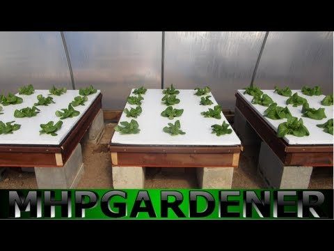 Hydroponic Lettuce Experiment - Comparing Water Soluble Fertilizers