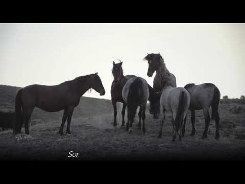 Video Wild Mustang Horse Birth In Utah Desert *GRAPHIC* Slide Show download in MP3, 3GP, MP4, WEBM, AVI, FLV January 2017