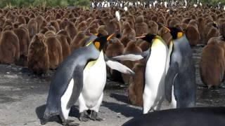 これでも、大変おキレになっているのだ… 『ペンギン同士のケンカ』が意外性の塊