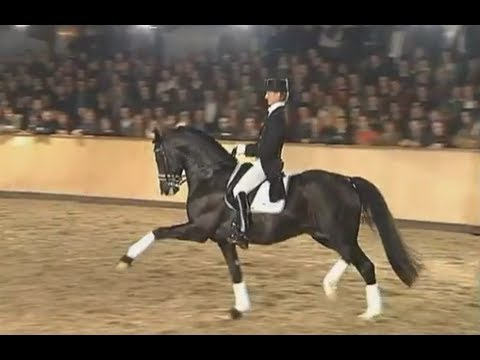 8 years old Totilas & Edward Gal stallion show 2008