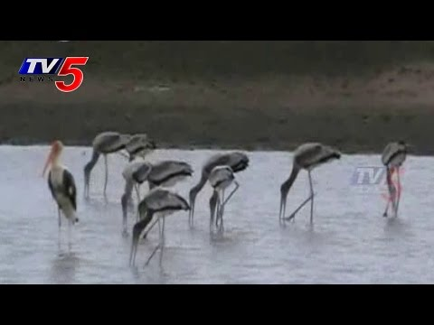 Enjoy birds During the migration | Australian Birds in Warangal : TV5 News