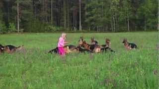 Adorable Video: Litle Girl 5 Years Old Playing With 14 German Shepherds