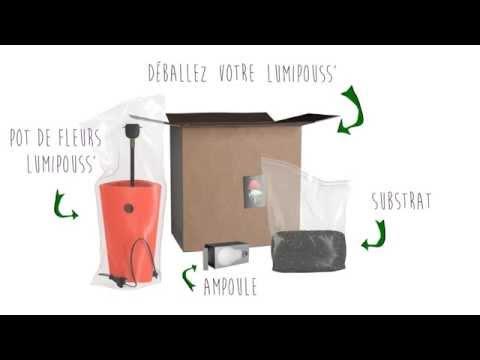Le lumipouss est un produit deux-en-un qui associe une plante � une lampe design