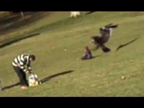 un'aquila cattura un bambino! (video shock)