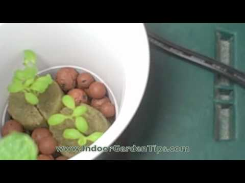 Small Indoor Vegetable Gardening – Hydroponic Grow Box