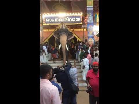 Video Thadathavila Rajasekaran@ Thirunakkara pooram_2 download in MP3, 3GP, MP4, WEBM, AVI, FLV January 2017