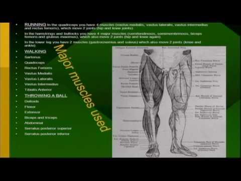 Kleinert Anatomie Klasse 2009 Gruppe 2