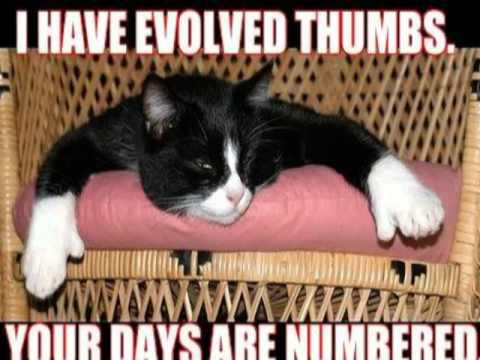 Κορυφαίο slideshow με έξυπνες γατούλες