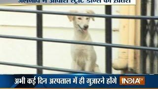Jalgaon India  City pictures : Street dog attacks 9 year old girl in Mumbai's Jalgaon - India TV