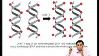 Mod-07 Lec-27 Epigenetic Regulation Of Gene Expression During Development