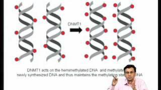 Mod-07 Lec-27 Epigenetic Regulation Of Gene Expression During Development