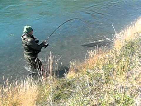 Pesca Salmón Chinook en Río Serrano Torres del Paine Chile, JRDS.AVI