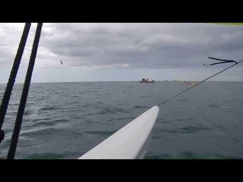 Segeln mit Delfinen