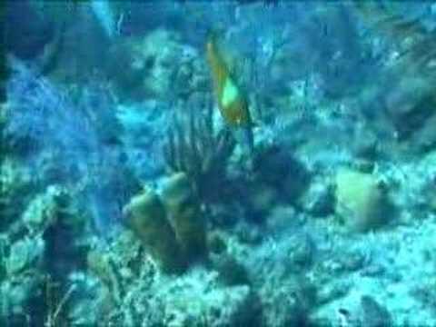 belize blue hole. Belize Sharks Blue Hole