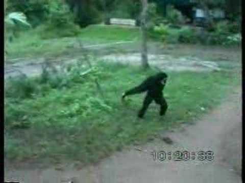 Mono le jala la cola a un perro