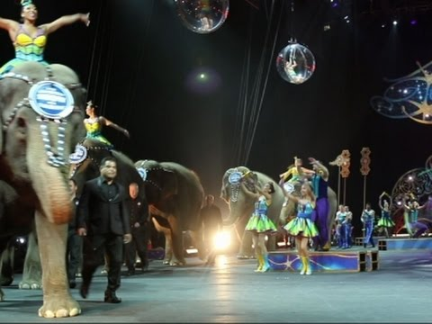 Elephants final circus performance