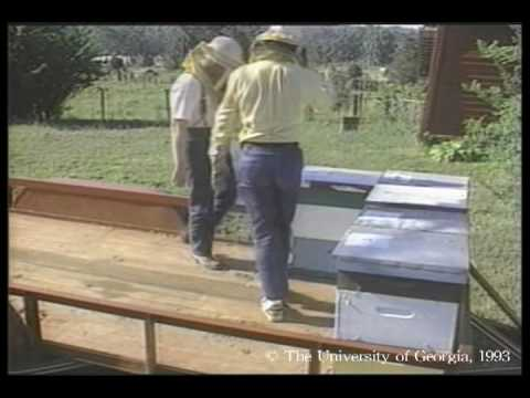 Honey Bees and Beekeeping 3.4: Migrating our hives