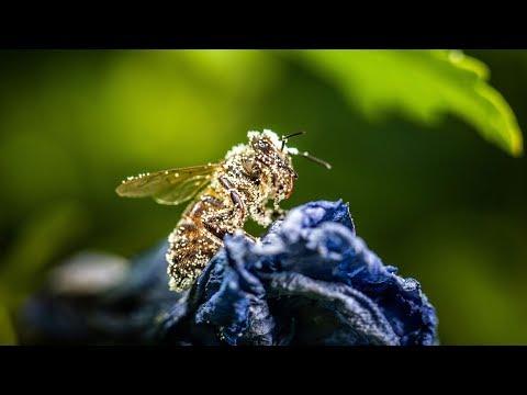 Bayern: Volksbegehren »Rettet die Bienen« setzt die Pol ...