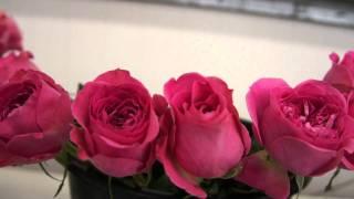 #492 David Austin Roses 2011 - Schnittrosenzüchtung 3v3