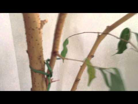 VALENTINA Insektenfänger Lampe