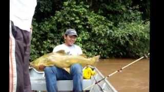 Pescaria No MS - Rios Miranda , Aquidauana E Paraguai