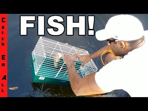 Video HAMSTER CAGE FISH TRAP Catches Rare Invasive Fish! download in MP3, 3GP, MP4, WEBM, AVI, FLV January 2017