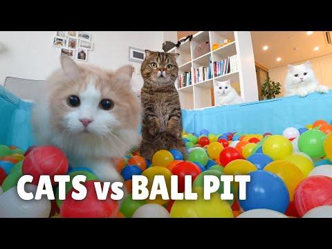 Cats vs Ball Pit   Kittisaurus