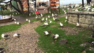 Hachinohe Japan  City new picture : Seagull Island - Hachinohe Japan