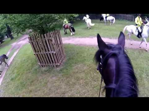 Ozzie ride - Horse Rangers Association - Hampton Court - Squadron 2