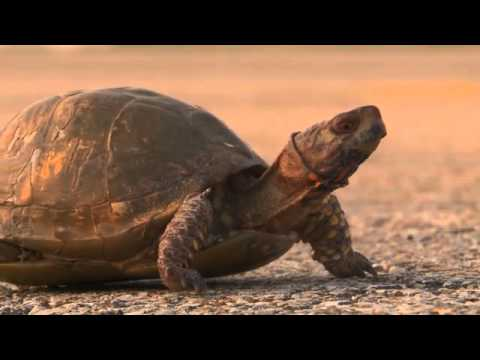Turtle Crossing - Discover Nature (KRCG)