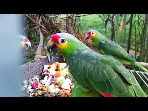 Сам ты дятел! Или как спасают попугаев?