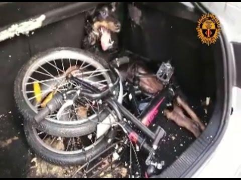 Policías rescatan a perro dentro del maletero de un coche Cullera (Valencia)